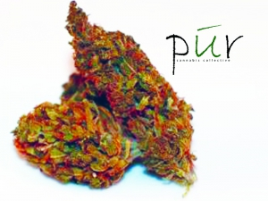Pur Cannabis Collective