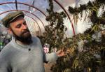 Marijuana club operator Marco Algorta is seen growing a strain known as ``Colombian Red`` in a rooftop greenhouse on June 22 in Montevideo, Uruguay, the world`s first nation to fully legalize cannabis.