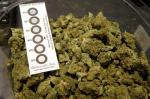 In this Wednesday, Oct. 17, 2018 photo a humidity indicator rests in a bowl of a strain of cannabis called ``Walker Kush`` at New England Treatment Access medical cannabis dispensary, in Northampton, Mass. The Walker Kush strain of cannabis is intended for legal recreational consumption once cannabis products can be sold legally in the state. Within days perhaps, the medical marijuana dispensary in Northampton expects to receive the final go-ahead to throw its doors open to anyone 21 or older who wants to purchase cannabis products ranging from flower to edibles, creams and even suppositories