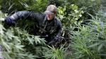 A warden with the California Department of Fish and Wildlife hacks down marijuana plants found growing in a deep ravine in the Sierra Nevada foothills.